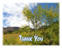 Note Cards - Thank You - Aspen