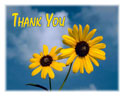 Note Cards - Thank You - Sunflowers