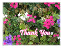 Note Cards - Thank You - P&P flowers